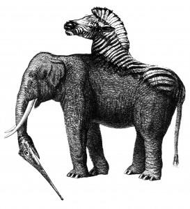 zoo 9